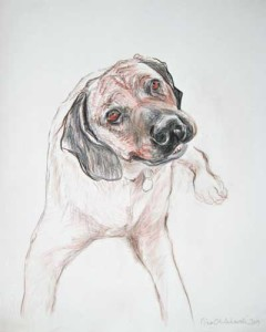 Hunter , Drawing, Rhodesian Ridgeback