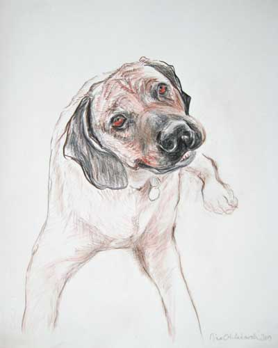 Hunter, Rhodesian Ridgeback, Pet Portrait Drawing of a Dog