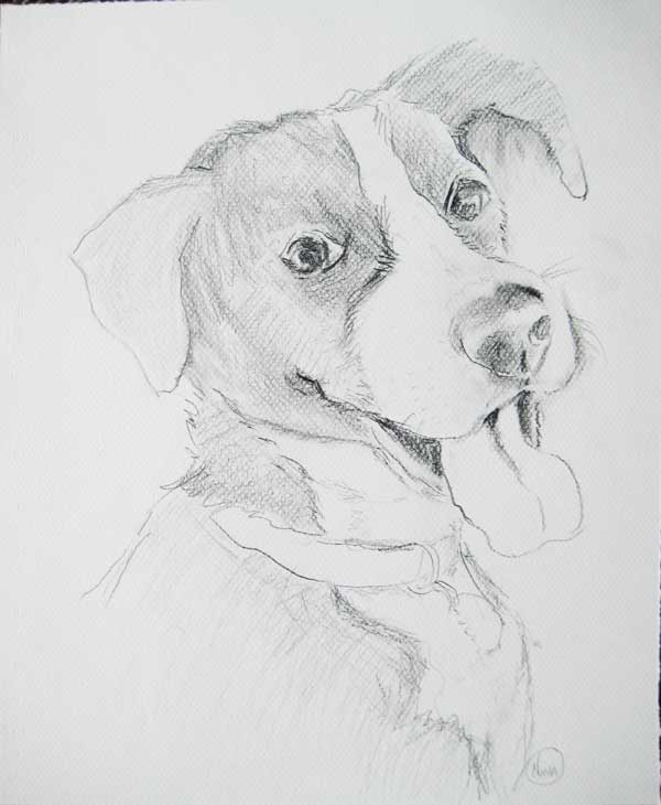 Molly_pet portrait_black and white dog_drawing